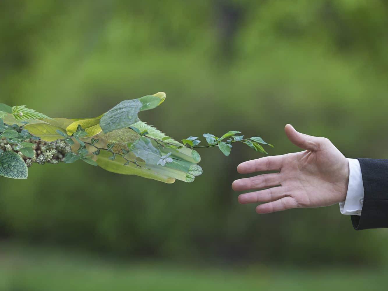 por qué es importante cuidar el medio ambiente