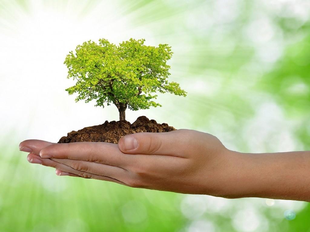 ecologista