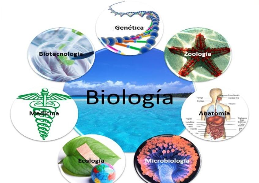 Ramas de la biología