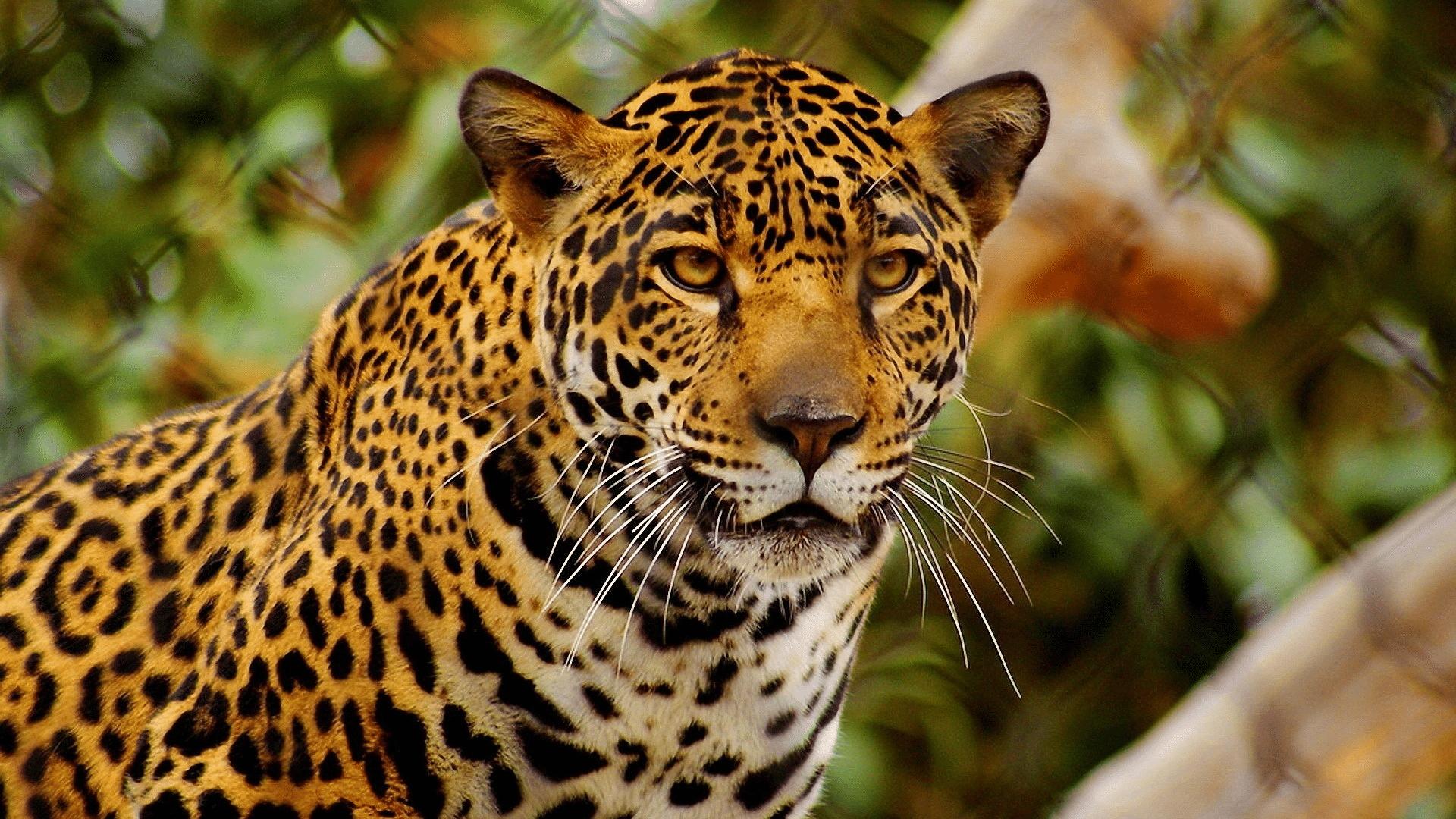 animales en peligro de extinción en Guatemala