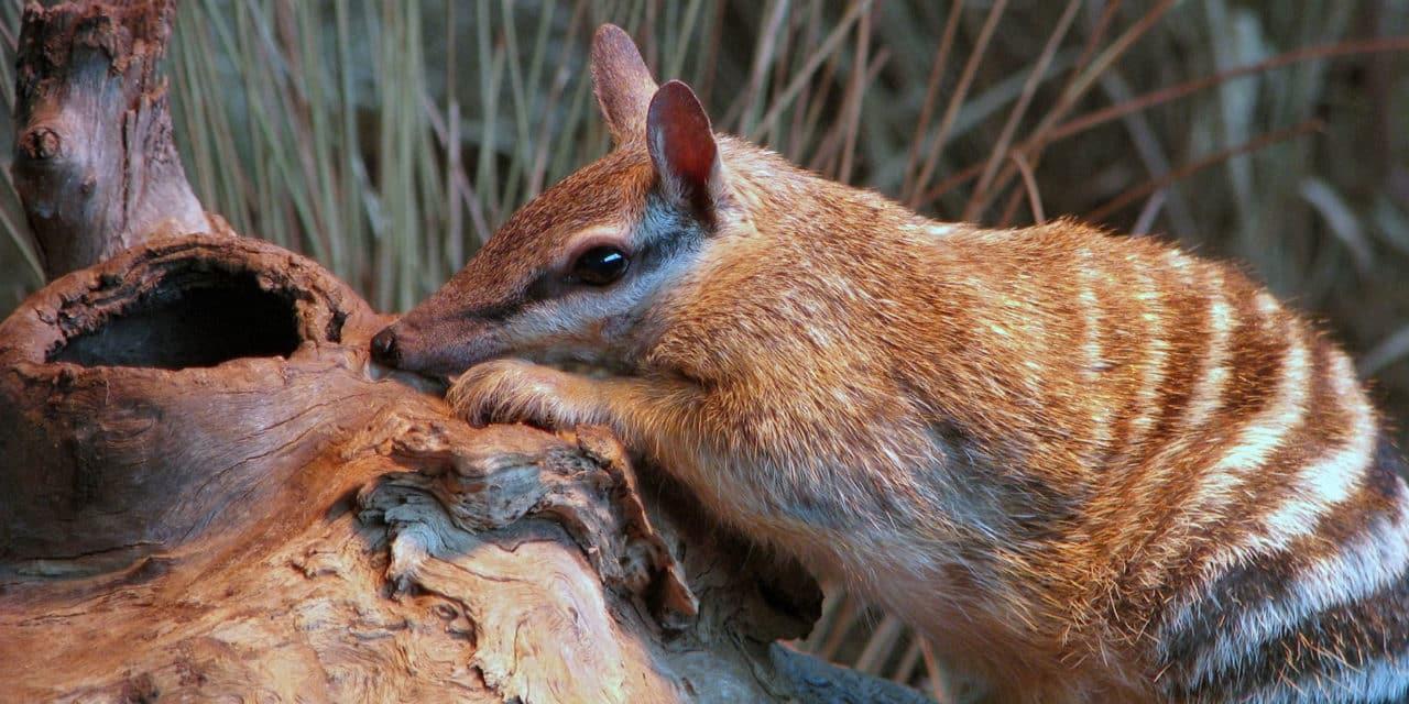 animales en peligro de exticion en Guatemala