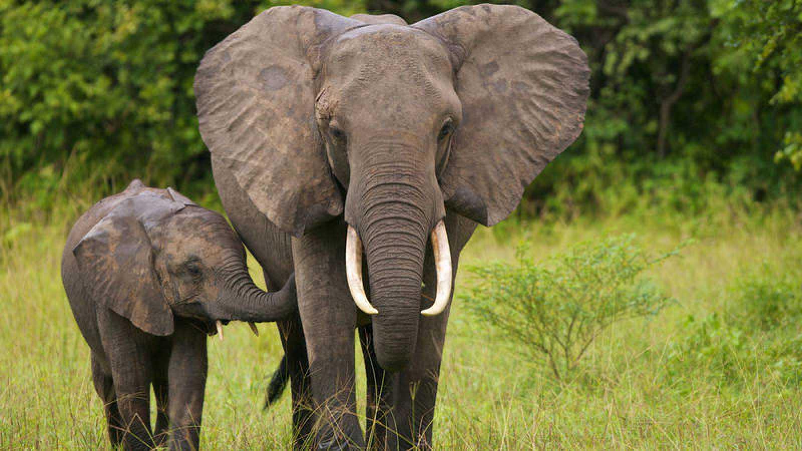 animales en peligro de extincion en africa