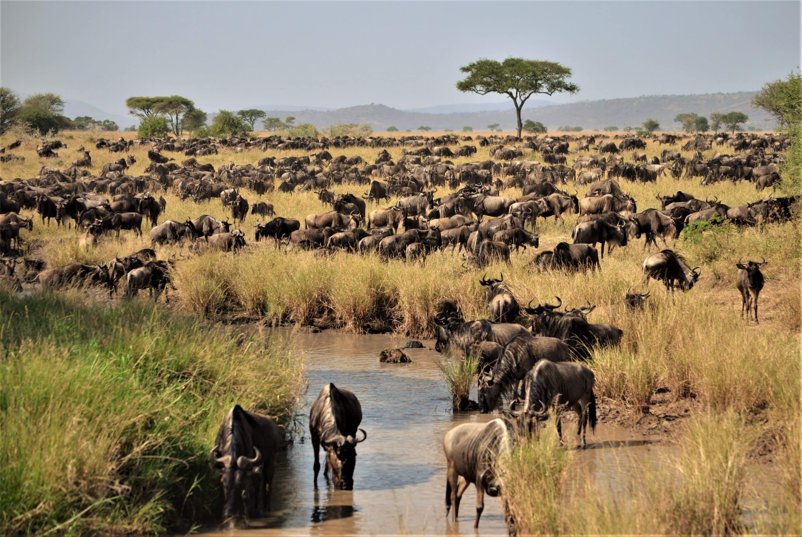 animales que migran