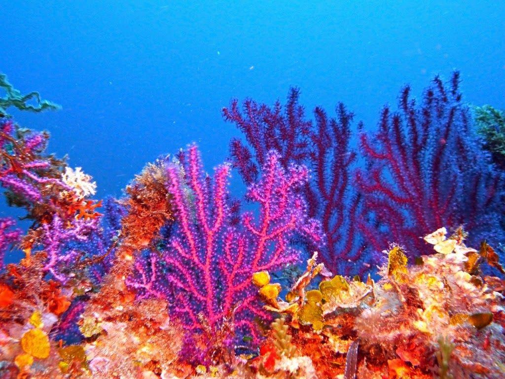 biodiversidad marina