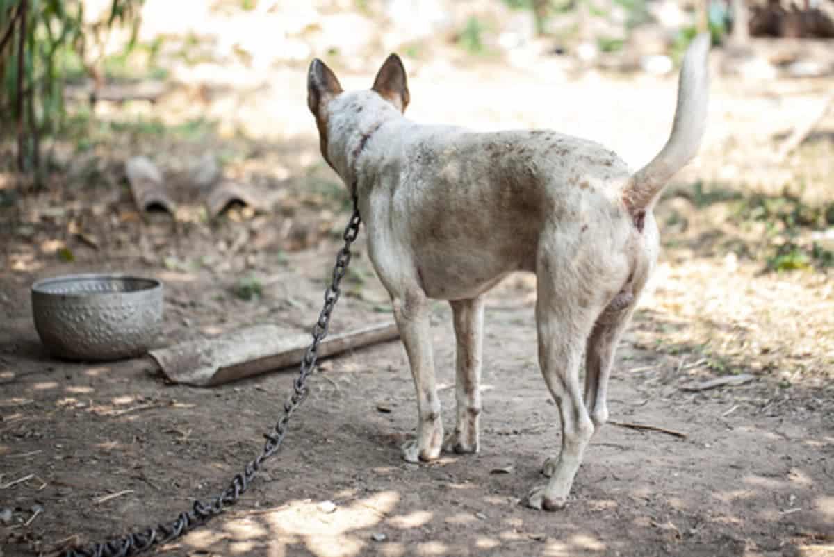 cómo evitar el maltrato animal