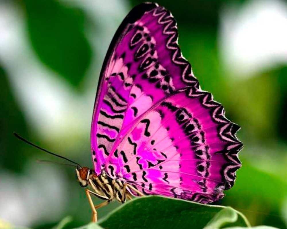 ¿Dónde viven las mariposas?