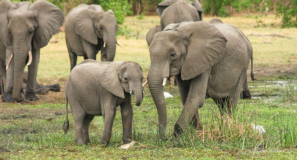 ¿Dónde viven los elefantes?