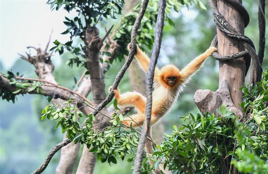Especies en peligro de extinción