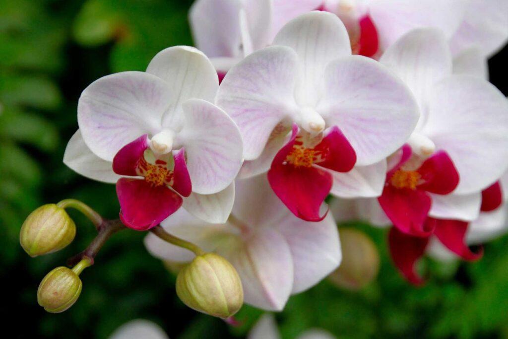 Flora de Guatemala