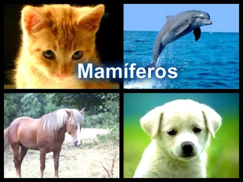 Los mamíferos para niños