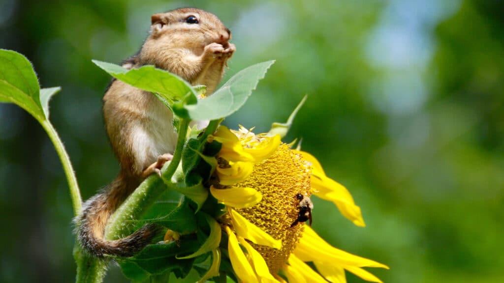 Pérdida de la biodiversidad