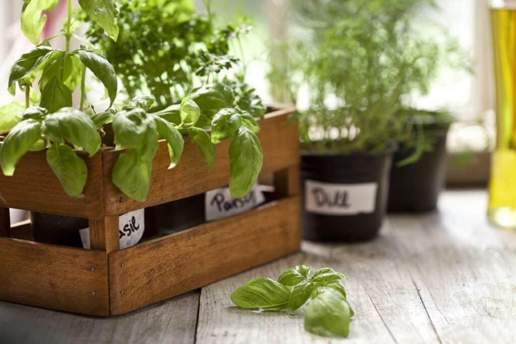 Plantas aromáticas5