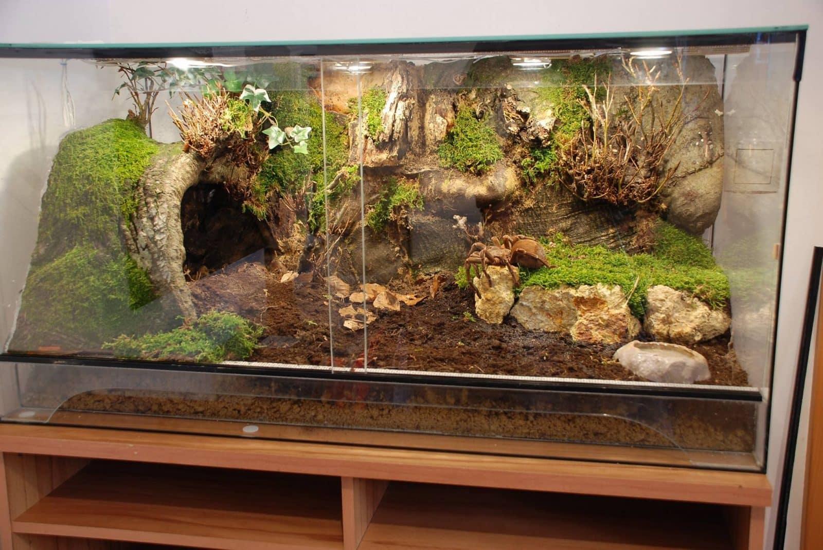 cómo hacer un terrario