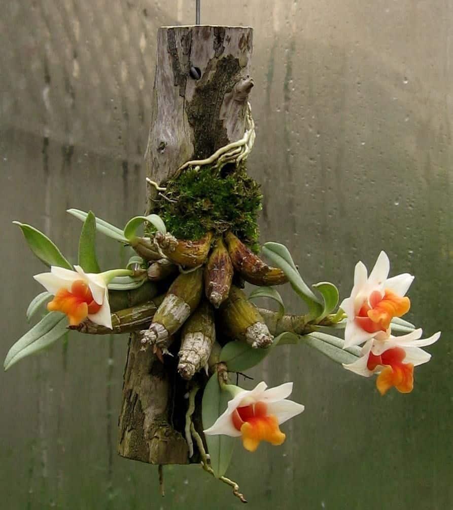 Tipos de orquídea
